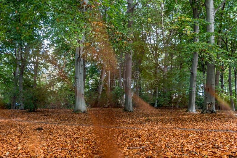 Άποψη φθινοπώρου ενός δάσους στοκ εικόνα με δικαίωμα ελεύθερης χρήσης