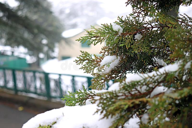 Άποψη φύσης κινηματογραφήσεων σε πρώτο πλάνο του πράσινου φύλλου στον κήπο μετά από τις χιονοπτώσεις Φυσικό τοπίο πράσινων εγκατα στοκ φωτογραφία με δικαίωμα ελεύθερης χρήσης
