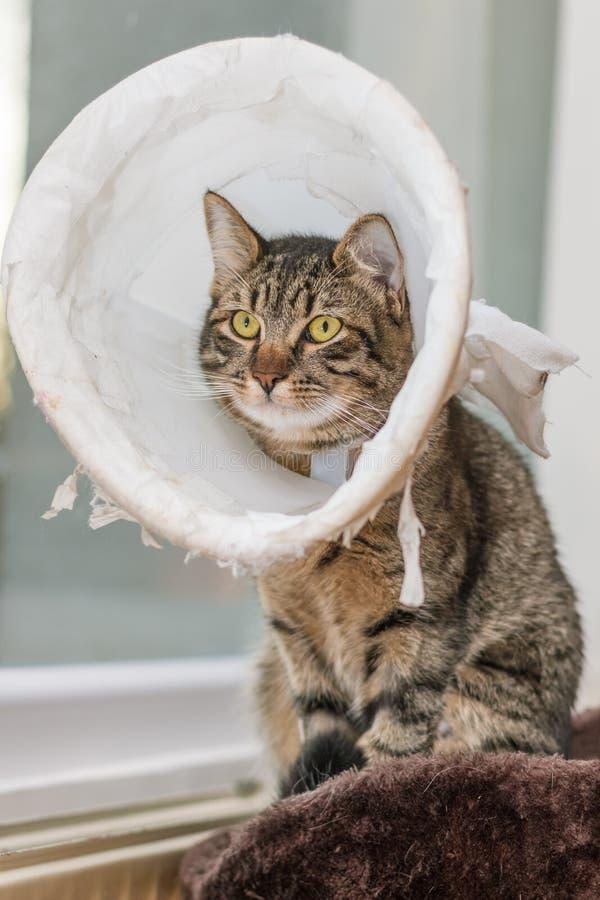 Άρρωστη τιγρέ γάτα με το πλαστικό περιλαίμιο στοκ φωτογραφίες