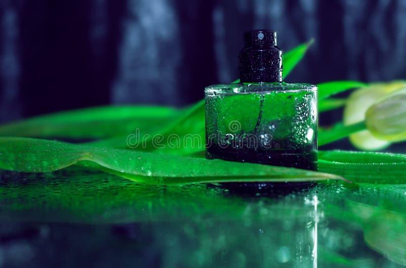 Άρωμα με τα πράσινα φύλλα στοκ φωτογραφία με δικαίωμα ελεύθερης χρήσης
