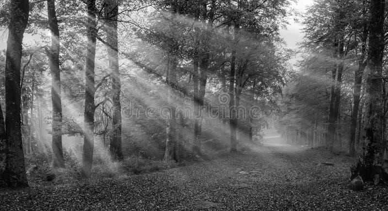 δάσος απόκοσμο στοκ φωτογραφία με δικαίωμα ελεύθερης χρήσης