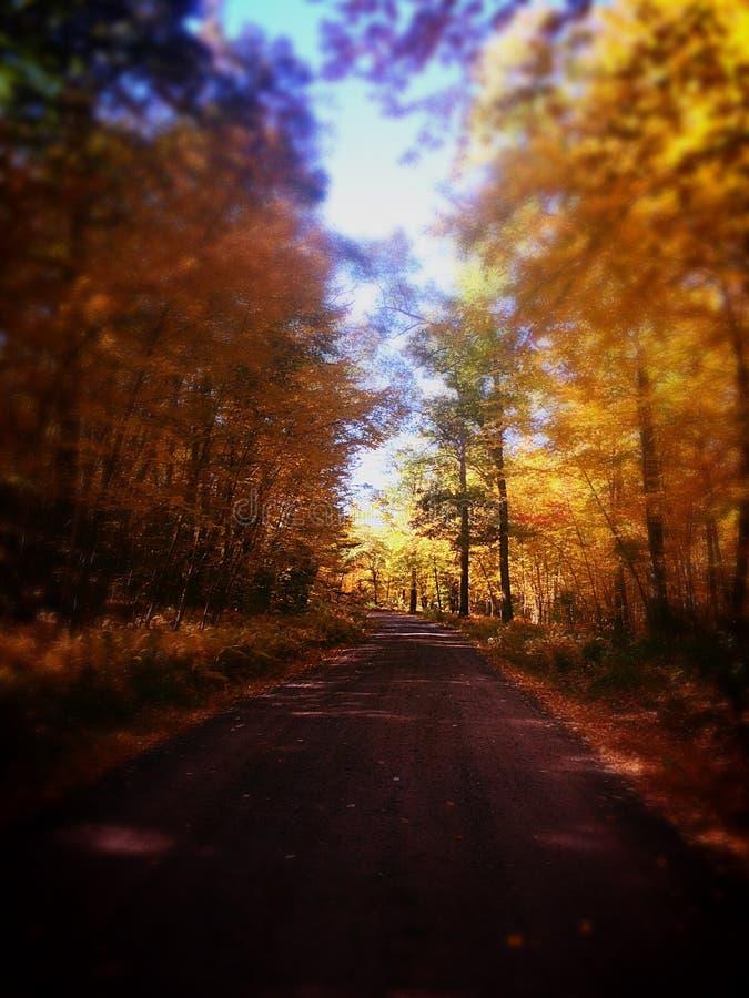 δάσος κίτρινο στοκ εικόνα με δικαίωμα ελεύθερης χρήσης