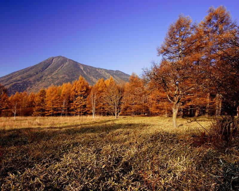 δάσος με την όμορφη θέα βουνού στοκ εικόνες