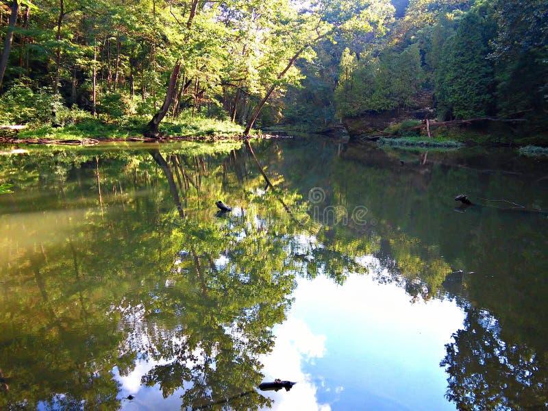 δάσος μυστικό στοκ εικόνες με δικαίωμα ελεύθερης χρήσης