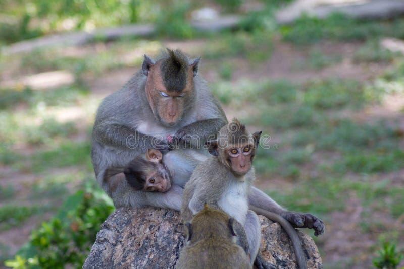 δάσος πιθήκων οικογενειακών νησιών του Μπαλί στοκ εικόνα με δικαίωμα ελεύθερης χρήσης