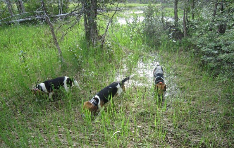 δάσος σκυλιών στοκ φωτογραφία