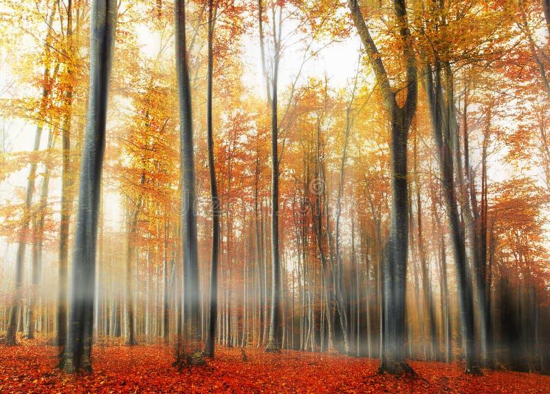 δάσος φθινοπώρου misty στοκ φωτογραφίες με δικαίωμα ελεύθερης χρήσης