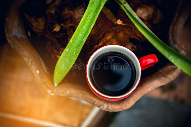 δάσος φλυτζανιών καφέ στοκ φωτογραφία με δικαίωμα ελεύθερης χρήσης