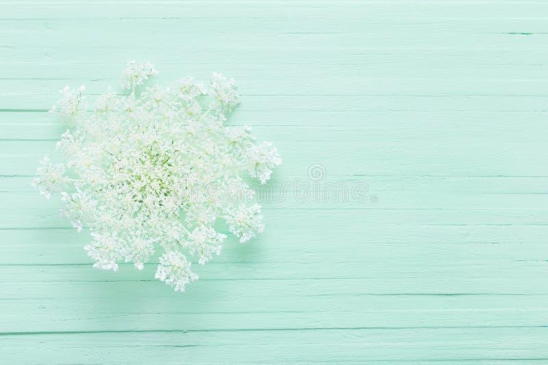 Άσπρα άγρια λουλούδια στο ξύλινο υπόβαθρο στοκ εικόνες