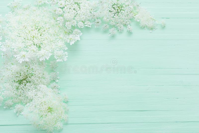 Άσπρα άγρια λουλούδια στο πράσινο υπόβαθρο στοκ φωτογραφία