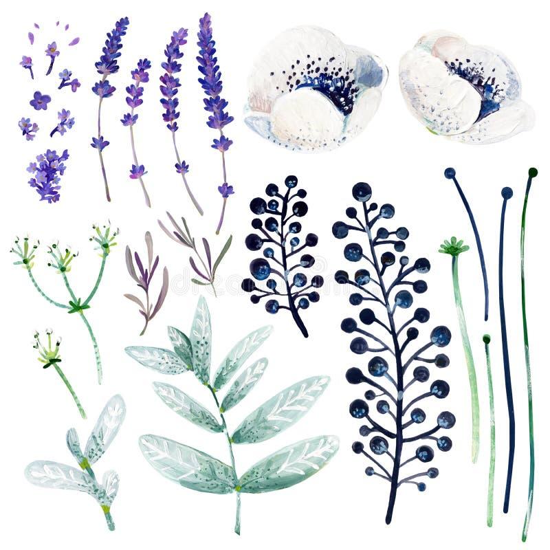 Άσπρα και ιώδη λουλούδια γκουας Hand-drawn clipart για την εργασία τέχνης και weddind το σχέδιο ελεύθερη απεικόνιση δικαιώματος