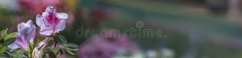 Άσπρα και ρόδινα λουλούδια στο αριστερό - έμβλημα στοκ φωτογραφία με δικαίωμα ελεύθερης χρήσης