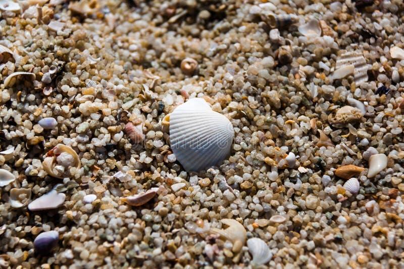 Άσπρα κοχύλια με τις πέτρες/βράχοι, άμμοι, μικρά κομμάτια του ξύλου στοκ εικόνες με δικαίωμα ελεύθερης χρήσης