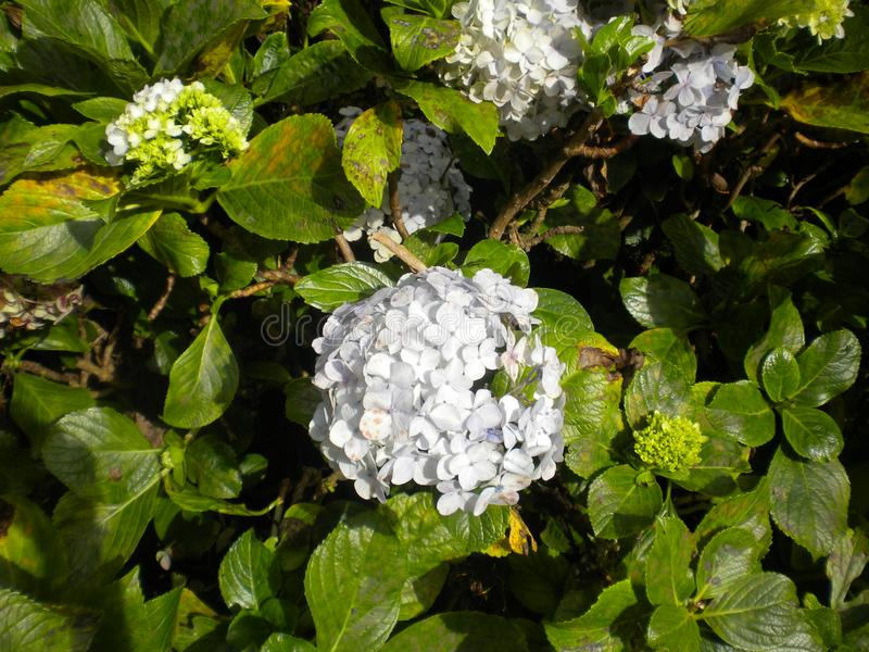 Άσπρα λουλούδια και υπόβαθρο χρώματος στοκ εικόνα