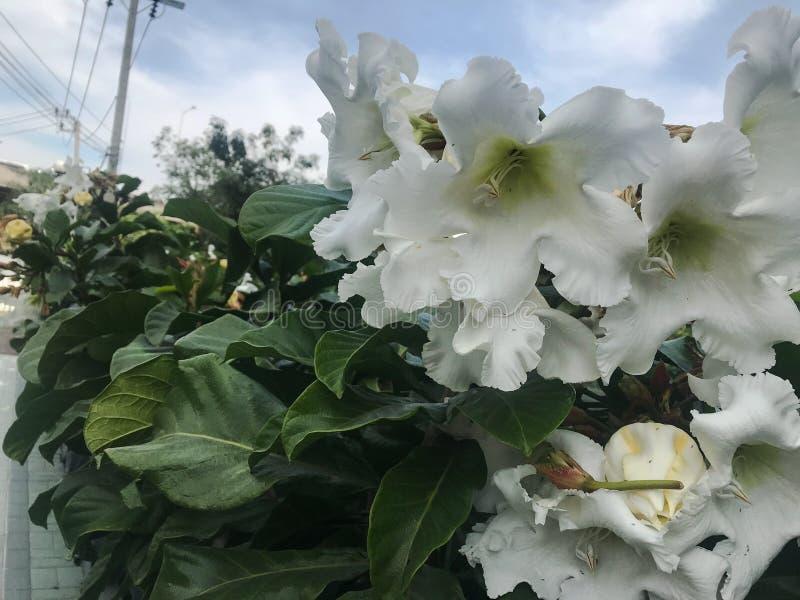 Άσπρα λουλούδια κατά μήκος της γέφυρας στοκ φωτογραφίες με δικαίωμα ελεύθερης χρήσης