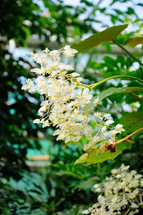 Άσπρα λουλούδια στην κινηματογράφηση σε πρώτο πλάνο στη Φρανκφούρτη Αμ Μάιν, Hesse, Γερμανία στοκ φωτογραφία με δικαίωμα ελεύθερης χρήσης