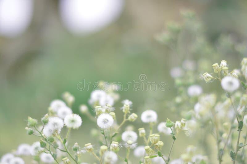 Άσπρα μαλακά λουλούδια στοκ εικόνα