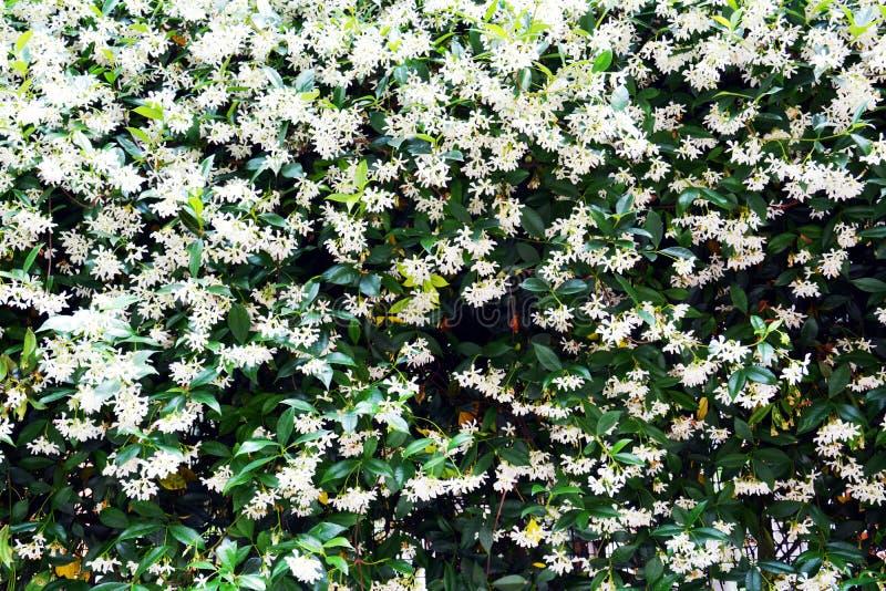 Άσπρα μικρά λουλούδια στους τοίχους στη Βενετία, στην Ιταλία, Ευρώπη στοκ εικόνες