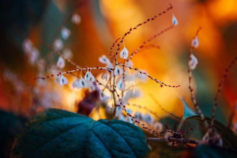 άσπρα μικρά λουλούδια στο ζωηρόχρωμο ονειροπόλο μαγικό κίτρινο κόκκινο μουτζουρωμένο υπόβαθρο, μαλακή εκλεκτική εστίαση, μακροεντ στοκ εικόνα με δικαίωμα ελεύθερης χρήσης