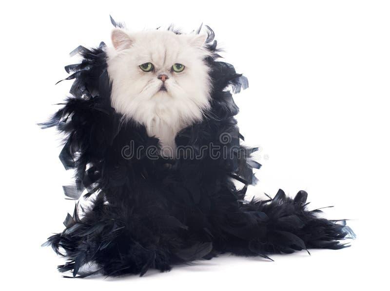 Άσπρα περσικά γάτα και boa στοκ εικόνα