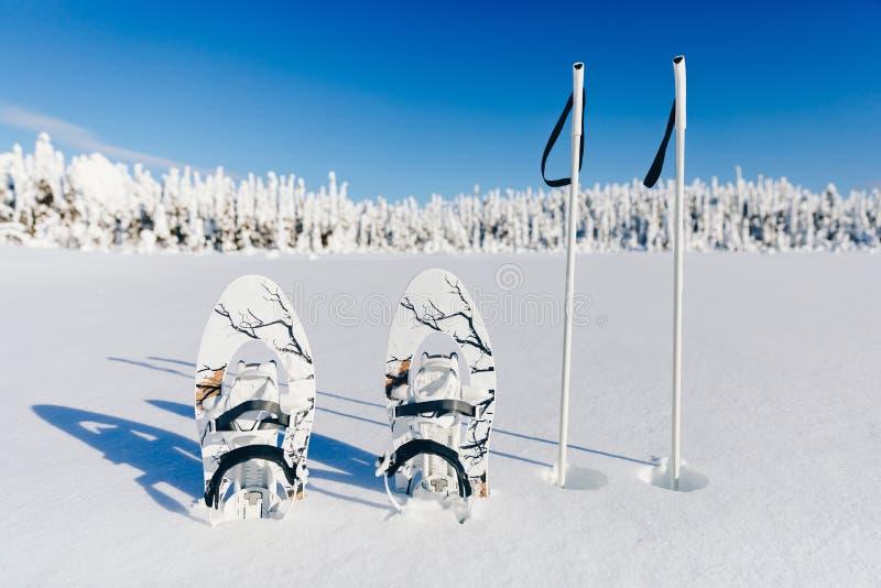 Άσπρα πλέγματα σχήματος ρακέτας με τους πόλους οδοιπορίας στο χιόνι στο χειμερινό δασικό και χιονώδες υπόβαθρο Snowshoeing στη Φι στοκ φωτογραφία με δικαίωμα ελεύθερης χρήσης