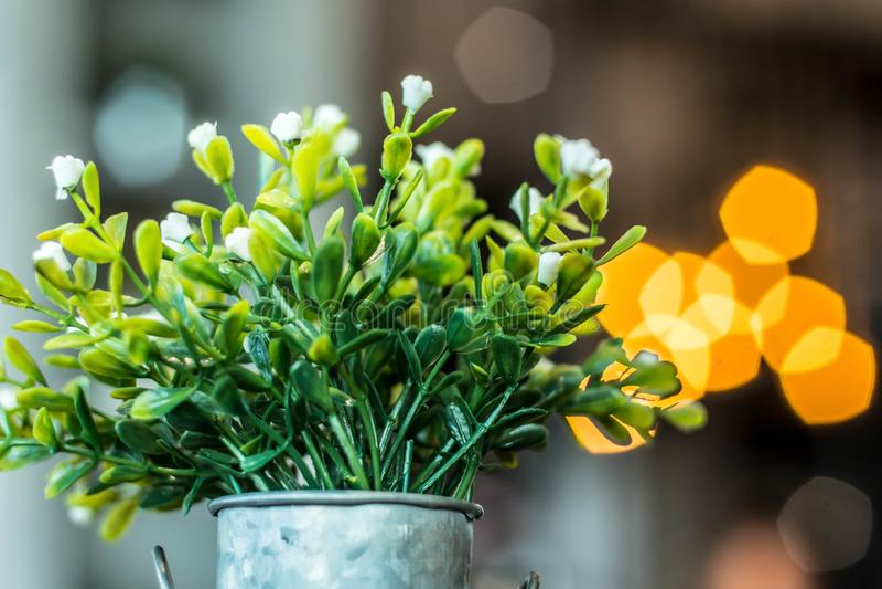 Άσπρα πλαστικά λουλούδια σε ένα δοχείο με το Πεντάγωνο bokeh στοκ φωτογραφίες με δικαίωμα ελεύθερης χρήσης