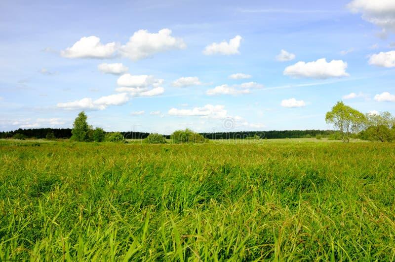 Άσπρα σύννεφα πέρα από τον ποταμό και το πράσινο δάσος στοκ φωτογραφία με δικαίωμα ελεύθερης χρήσης