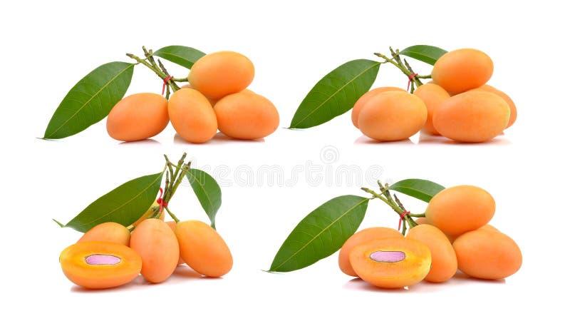 Άσπρα της Παρθένου Μαρίας φρούτα δαμάσκηνων, mayongchid στο άσπρο υπόβαθρο στοκ φωτογραφία με δικαίωμα ελεύθερης χρήσης