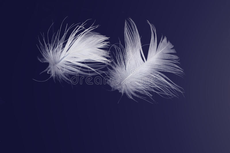 Άσπρα φτερά που επιπλέουν στο μπλε ελεύθερη απεικόνιση δικαιώματος