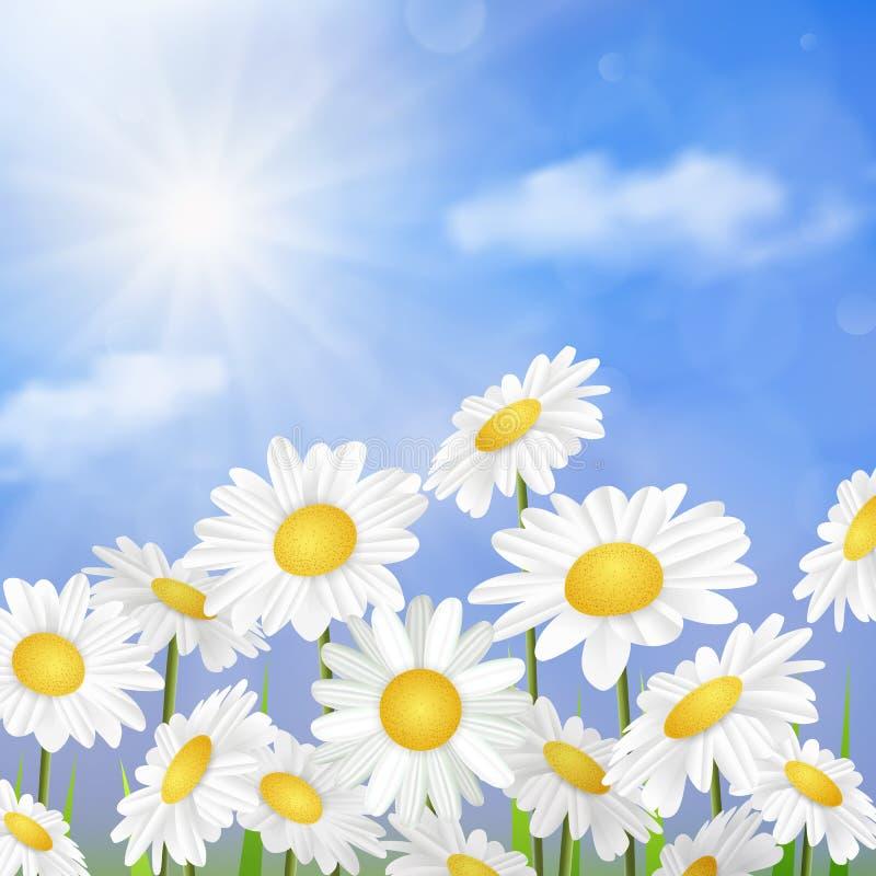 Άσπρα chamomile λουλούδια μαργαριτών διανυσματική απεικόνιση