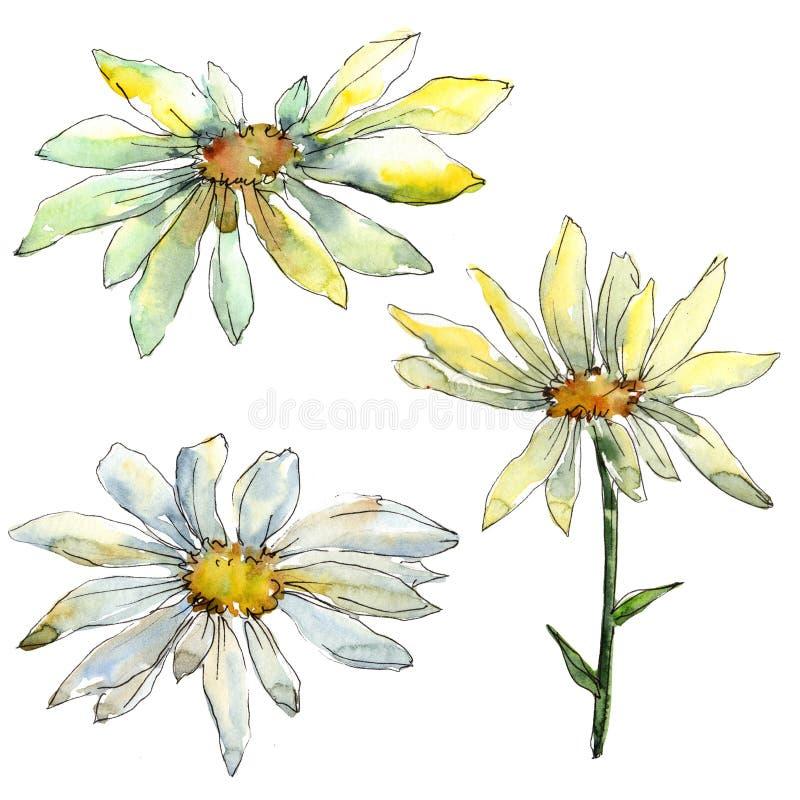 Άσπρα floral βοτανικά λουλούδια μαργαριτών r Απομονωμένο στοιχείο απεικόνισης μαργαριτών στοκ φωτογραφίες