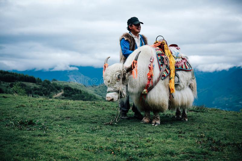 Άσπρα yak στοκ εικόνα με δικαίωμα ελεύθερης χρήσης