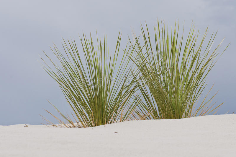 Άσπρες άμμοι, βλάστηση στοκ εικόνες