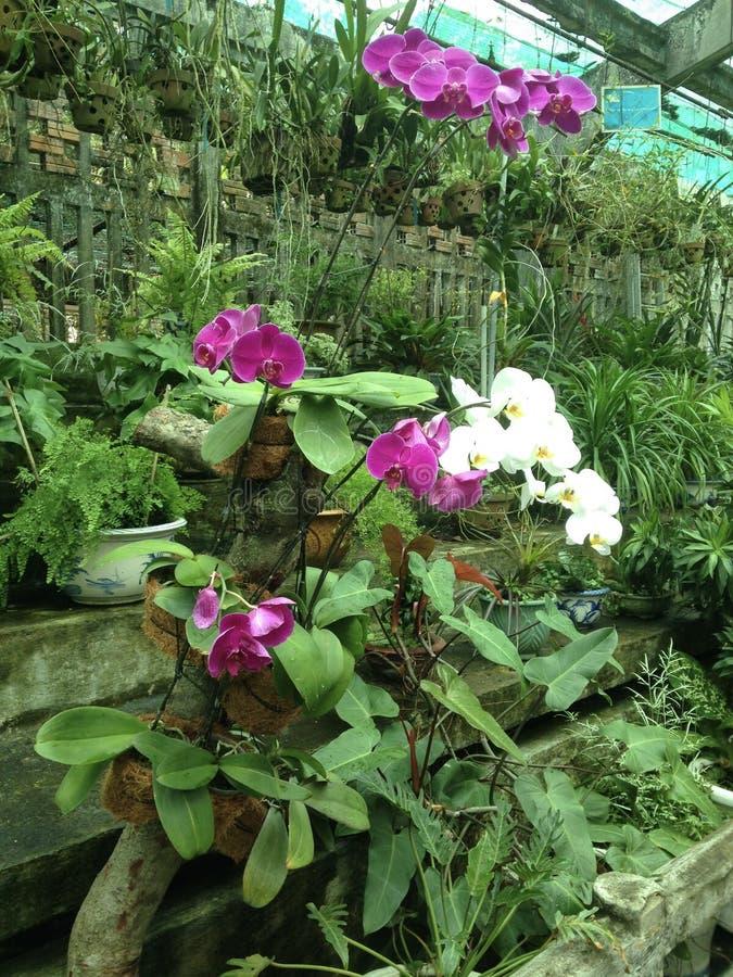 Άσπρες και ρόδινες ορχιδέες στον τροπικό κήπο στοκ φωτογραφία με δικαίωμα ελεύθερης χρήσης