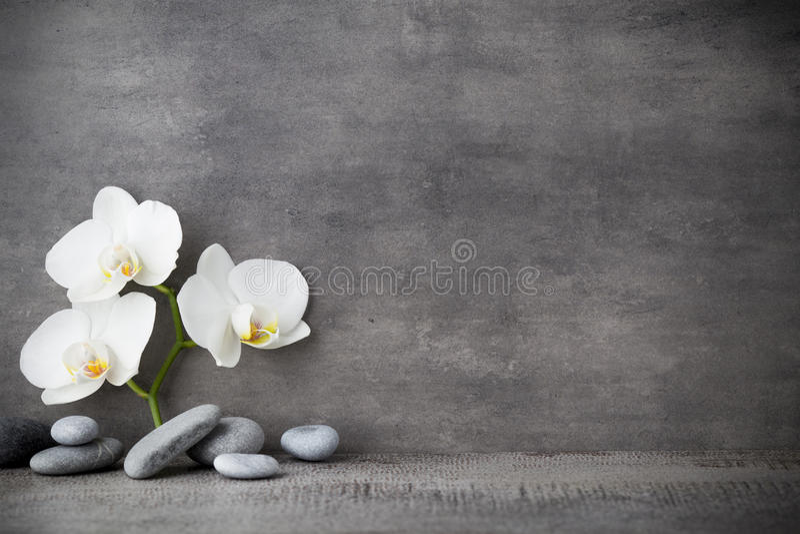 Άσπρες πέτρες ορχιδεών και SPA στο γκρίζο υπόβαθρο