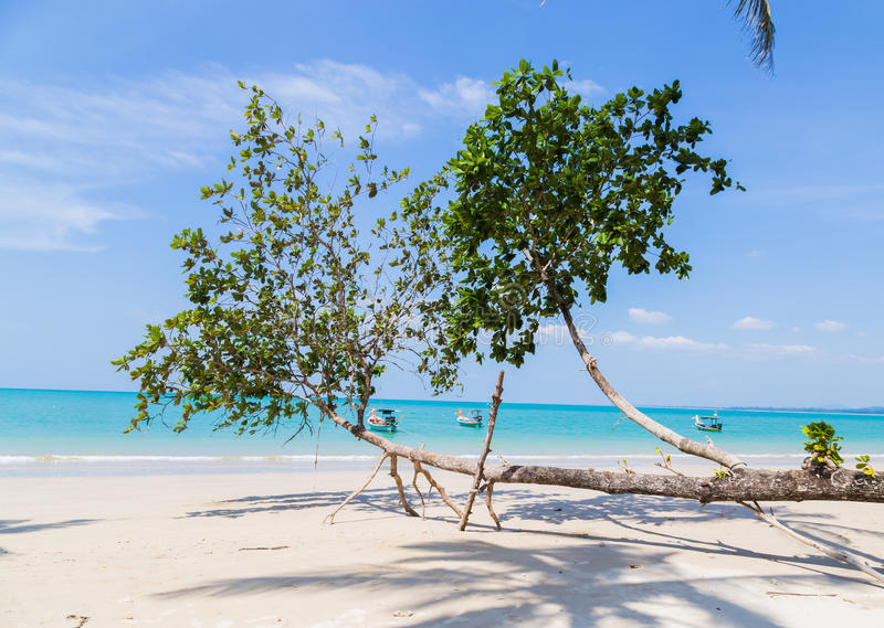 Άσπρες παραλία και βάρκες άμμου στοκ εικόνες