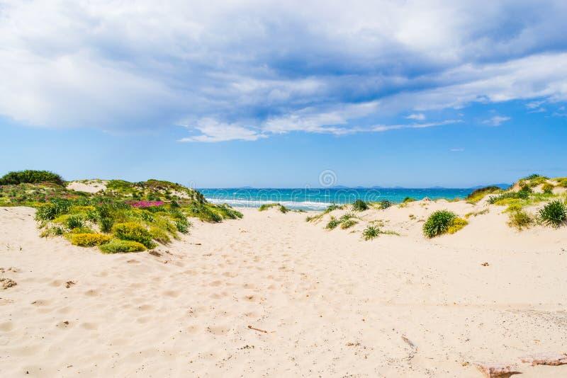 Άσπρη άμμος στην ακτή Platamona στοκ εικόνα με δικαίωμα ελεύθερης χρήσης