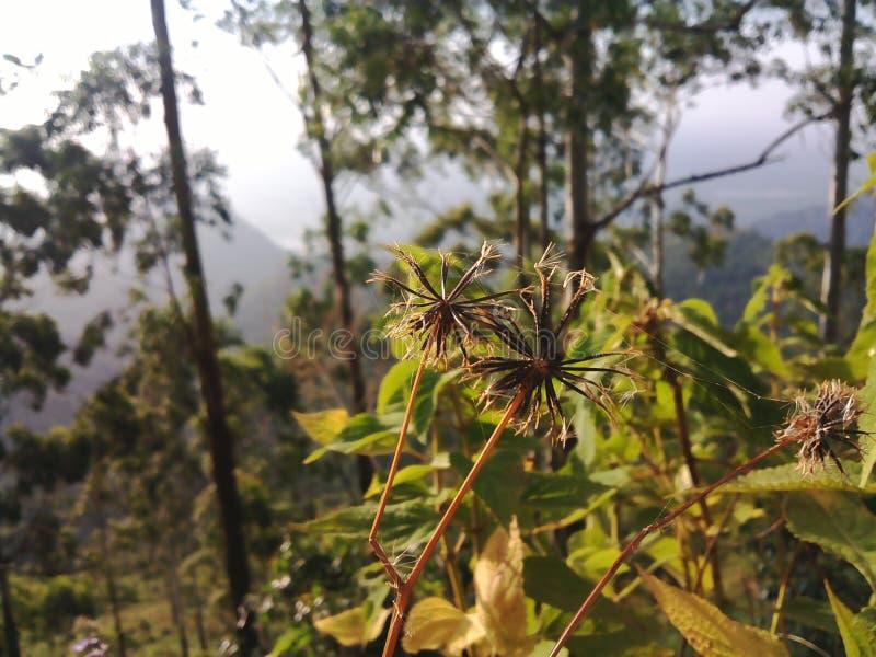 Άσπρη άποψη λουλουδιών και βουνών dide στοκ φωτογραφίες με δικαίωμα ελεύθερης χρήσης