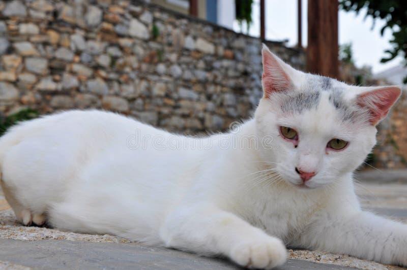 Άσπρη άστεγη γάτα που βρίσκεται στην οδό στην παλαιά πόλη της Αλοννήσου στοκ φωτογραφία