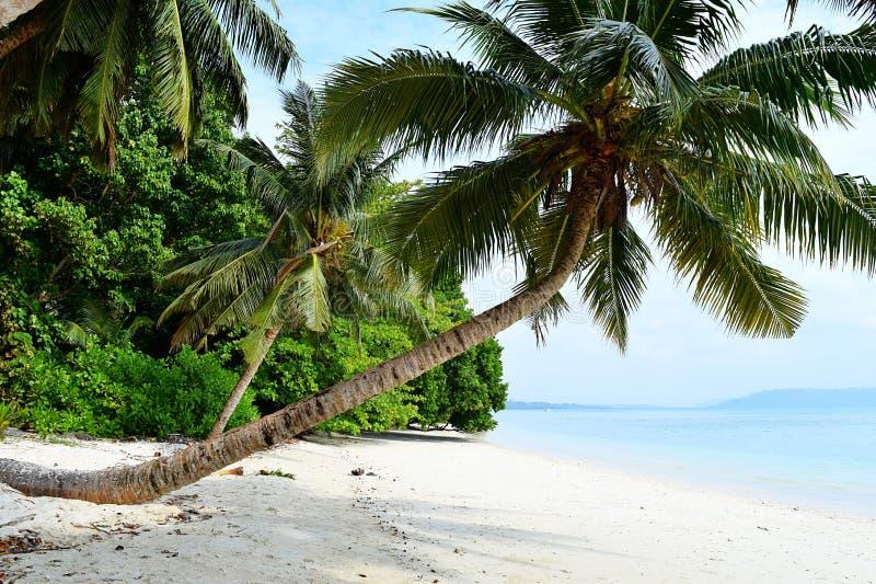 Άσπρη αμμώδης παραλία με το κυανό νερό με το κλίνοντας δέντρο και την πρασινάδα καρύδων - Vijaynagar, Havelock, Andaman Nicobar,  στοκ εικόνα