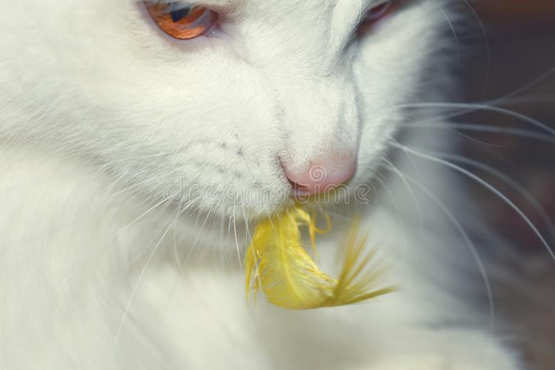 Άσπρη γάτα και κίτρινο φτερό πουλιών στοκ φωτογραφία