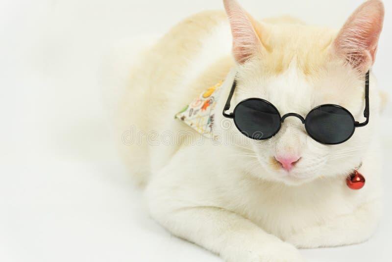 Άσπρη γάτα με ένα άσπρο υπόβαθρο στοκ φωτογραφία με δικαίωμα ελεύθερης χρήσης