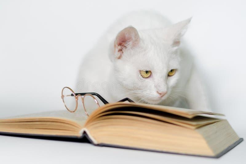 Άσπρη γάτα με τα γυαλιά και ένα βιβλίο καθαρό στενό σε έναν επάνω υποβάθρου στοκ φωτογραφία με δικαίωμα ελεύθερης χρήσης
