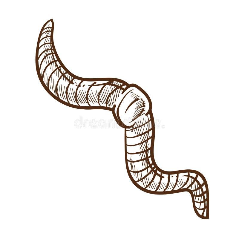 Άσπρη διανυσματική απεικόνιση εντόμων σκίτσων περιλήψεων γεωσκωλήκων μονοχρωματική απεικόνιση αποθεμάτων