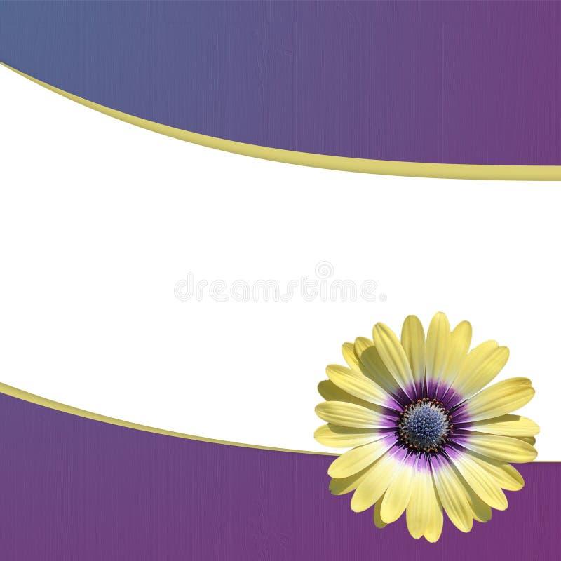 Άσπρη κάρτα με μια ενιαία κίτρινη μαργαρίτα σε ένα μπλε και πορφυρό υπόβαθρο κλίσης ελεύθερη απεικόνιση δικαιώματος