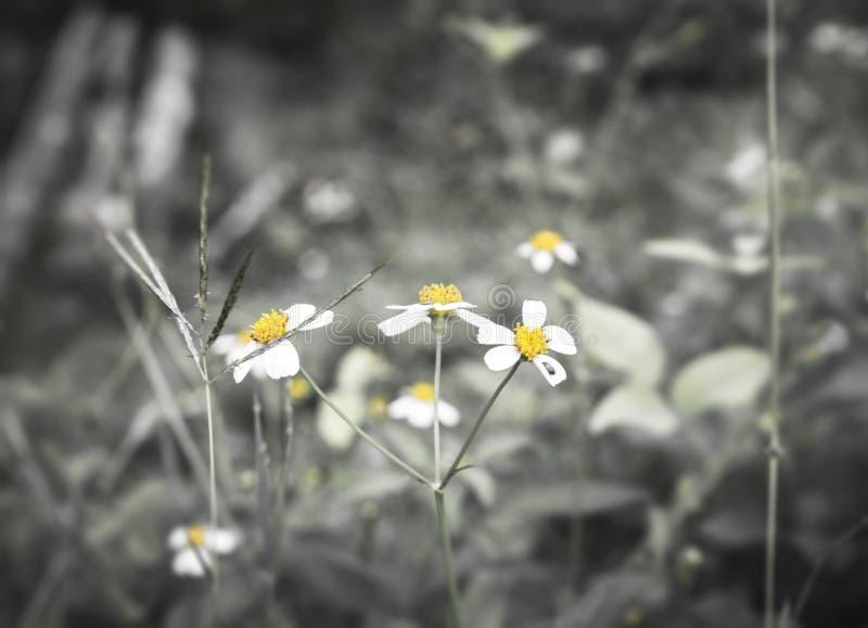 Άσπρη κινηματογράφηση σε πρώτο πλάνο χλόης λουλουδιών άχρωμη στοκ εικόνα