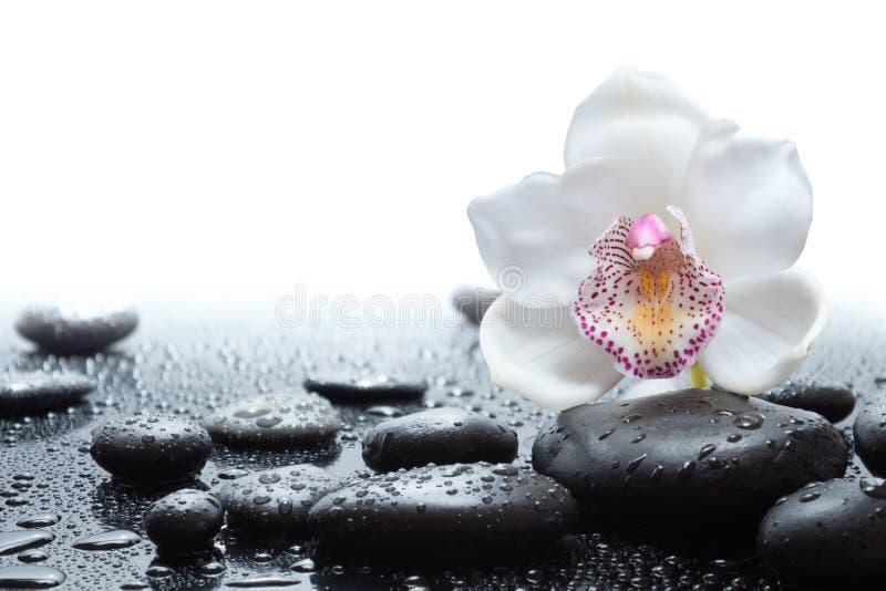 Άσπρη ορχιδέα και υγρές μαύρες πέτρες στοκ εικόνες με δικαίωμα ελεύθερης χρήσης
