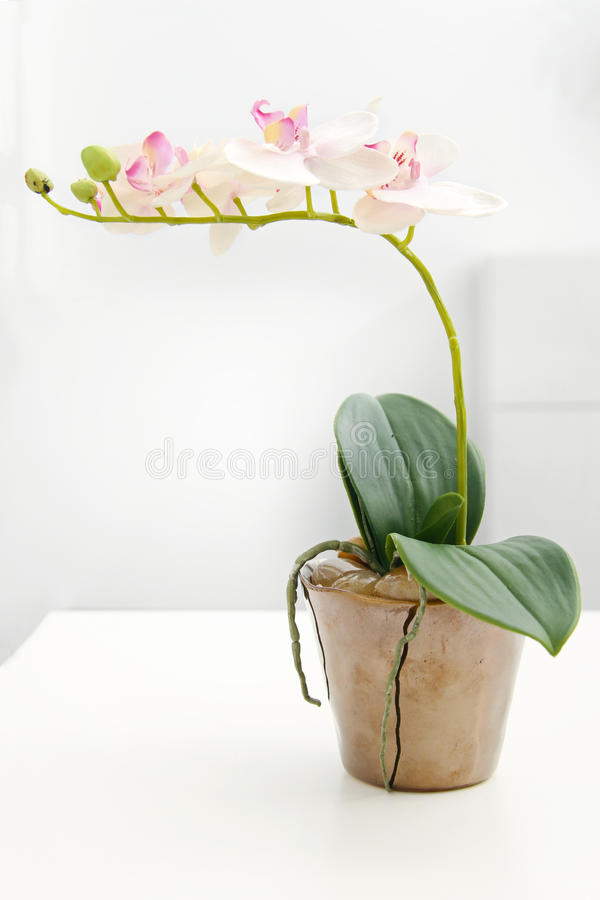 Άσπρη ορχιδέα στο δοχείο λουλουδιών στον πίνακα στοκ εικόνα