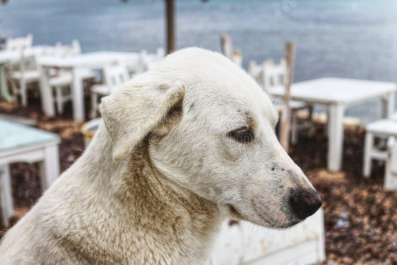 Άσπρη σκέψη σκυλιών στοκ φωτογραφία με δικαίωμα ελεύθερης χρήσης