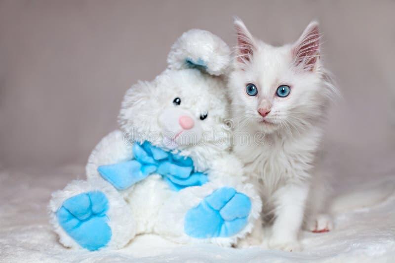 Άσπρη συνεδρίαση γατακιών με ένα κουνέλι παιχνιδιών στοκ εικόνες με δικαίωμα ελεύθερης χρήσης
